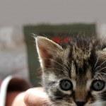 Cute little kitten — Stock Photo #10252810