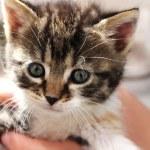 Cute little kitten — Stock Photo #10252946