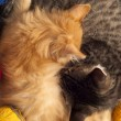 Stock Photo: Two sleepy kittens