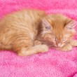 Stock Photo: Red kitten on pink towel