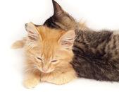 Two sleepy kittens — Stock Photo
