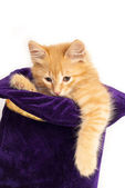 Red kitten in magic hat — Stock Photo