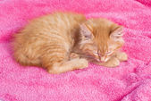 Red kitten on the pink towel — Stock Photo