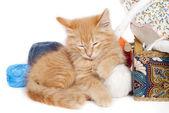 Red sleepy kitten — Stock Photo