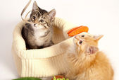 Two cute playful kittens — Stock Photo