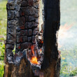 Smouldering tree trunk burned out in the middle — Stock Photo #10615070