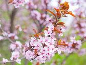Beautiful Pink Flower Blossom — Stock Photo