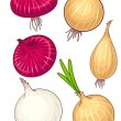 Different Onion — Stock Vector