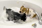 Pups Taking a Bath. — Stock Photo