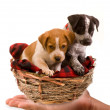 Stock Photo: Puppies .