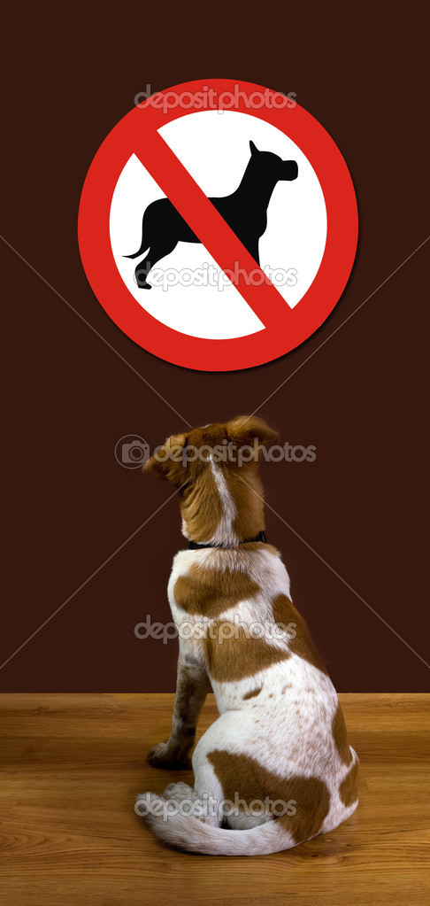 Puppy looking at sign and wondering why no dogs allowed. — Stock Photo #9571716