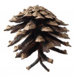 Pinecone — Stock Photo #8990602