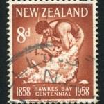 Maori shearing sheep — Stock Photo #10276894
