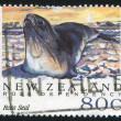 Antarctic Seals — Stock Photo
