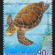 Stock Photo: Loggerhead turtle