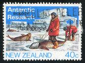 Homens whith selo e pinguim — Foto Stock