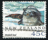 Weddell seal — Stock Photo