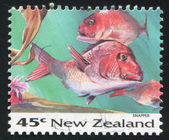 NEW ZEALAND - CIRCA 1993: stamp printed by New Zealand, shows Fish, Snapper, circa 1993 — Stock Photo