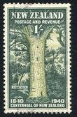 Giant Kauri — Stock Photo