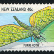 Stock Photo: Puriri moth