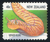 Veined slug — Stock Photo