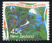 Protect native fauna and flora — Photo