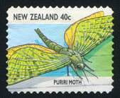 Puriri moth — Stock Photo