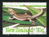 Gouden gestreepte gecko — Stockfoto