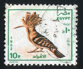 Egyptian hoopoe — Stock Photo