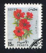 Kırmızı çiçekler — Stok fotoğraf