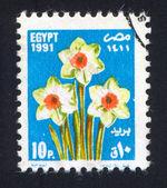 Flores blancas — Foto de Stock
