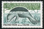 Dugong — Stock Photo