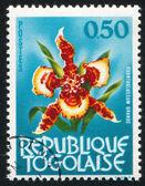 Orchidee blume — Stockfoto