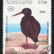 Variable Oystercatcher - 图库照片