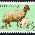 Ewe and lamb — Stock Photo