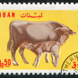 Cow and Calf — 图库照片
