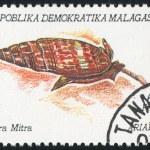 Mollusk — Stock Photo