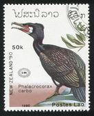 Great Cormorant — Stock Photo