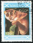 Lemur — Stok fotoğraf