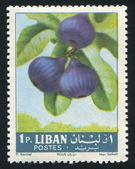 Figs — Foto de Stock