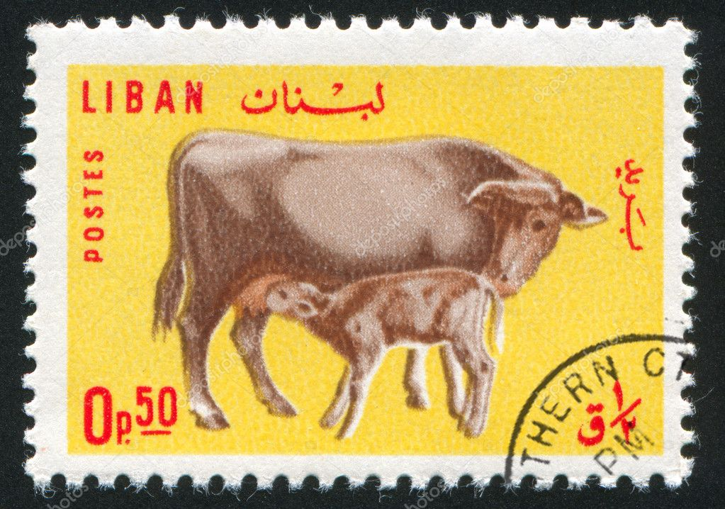 LEBANON CIRCA 1965: stamp printed by Lebanon, shows Cow and Calf, circa 1965 — Stock Photo #8341889