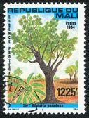 Shea tree — Stock Photo