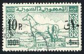 Arab Horse — Stock Photo