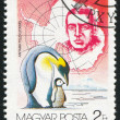 Ernest Shackleton and Penguins — Stockfoto