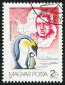 Ernest shackleton e pinguins — Foto Stock
