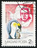 Ernest shackleton ve penguenler — Stok fotoğraf