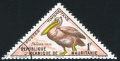 Pink-backed pelican — Stock Photo