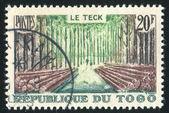 Teak skog — Stockfoto