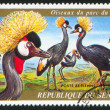 Crested cranes — Stock Photo