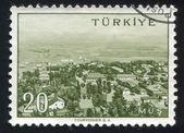 Türkiye mus — Stok fotoğraf